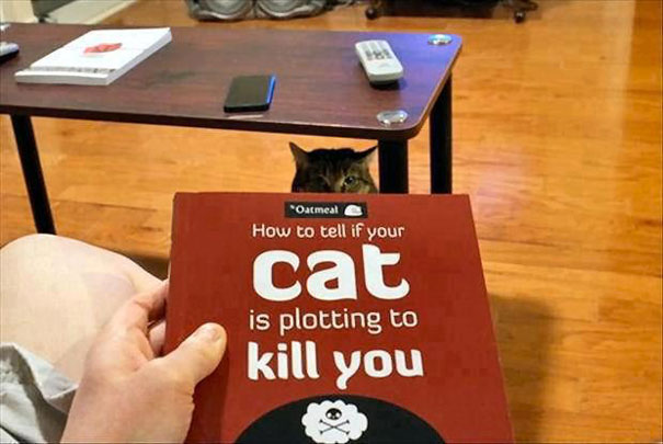 Cat is secretly planning to kill you